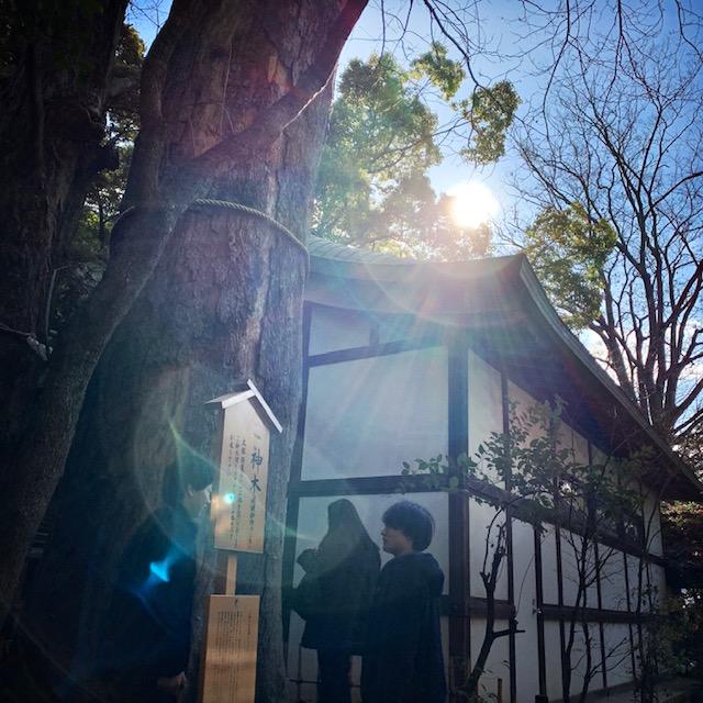 氷川神社さんのご神木