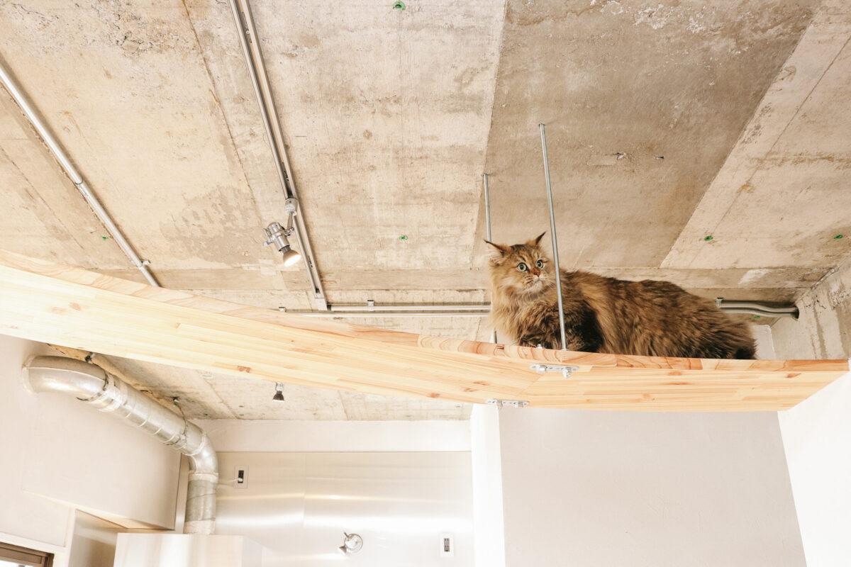 猫 リフォーム かなう家
